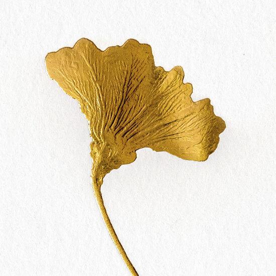 Kunstblatt Stahlstich Seelilie